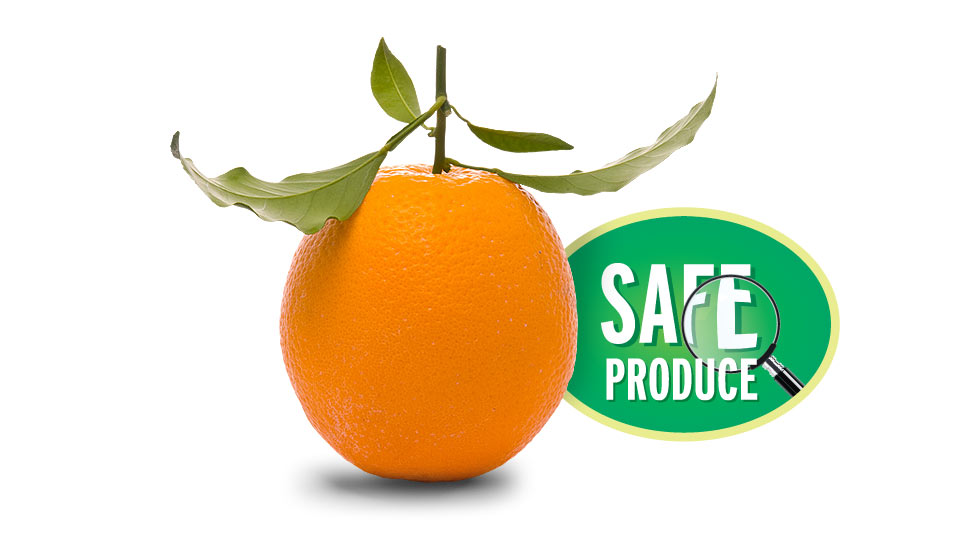 Türkmenoğlu safe produce orange